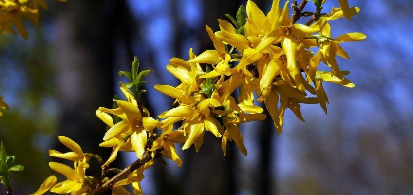 Frühlingsspaziergänge